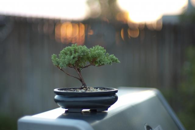 bonsai tsukurikata